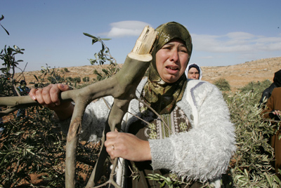 Palestinian woman cries at her olive grove after it was cut by settlers-Dec 7, 2007-Nayef