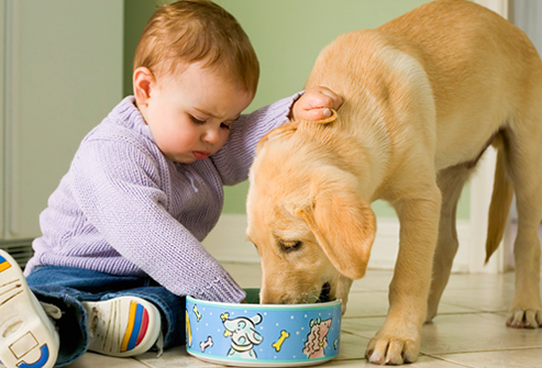 http://img.webmd.com/dtmcms/live/webmd/consumer_assets/site_images/articles/health_tools/taking_care_of_puppy_slideshow/corbis_rm_photo_of_baby_with_puppy.jpg